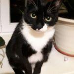 Кота, хозяйка которого трагически погибла, хотят выгнать на улицу