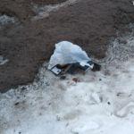 В Смоленске нашли пакет с мертвыми котятами
