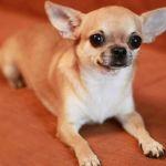 Ветеринарная служба усыпила потерявшуюся домашнюю собаку