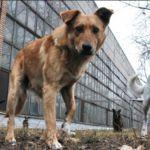 Свора собак терроризирует Заднепровский район