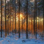 Прогноз погоды на пятницу, 13 декабря