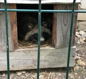 «Молодежка ОНФ» помогла смоленскому приюту для бездомных животных