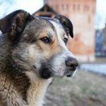 Самый известный в Смоленске пес Полкан погиб