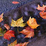 Прогноз погоды на четверг, 7 ноября