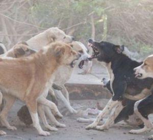Жители микрорайона сообщают об агрессивных бродячих собаках