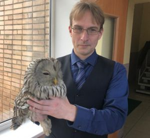 Сотрудники СмолГУ спасли сову от стаи ворон