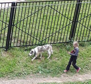 Девочка с ножом и стаей собак держит в страхе жителей Королёвки
