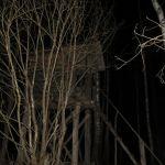 В Смоленской области поймали браконьера из Москвы