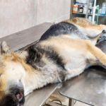 Живодёр дважды выстрелил в привязанную собаку