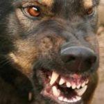 В областном центре свора собак напала на детей