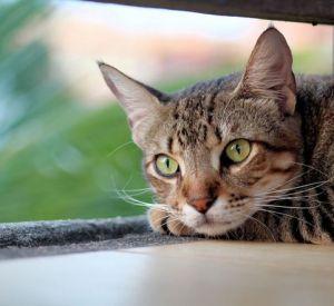 Вяземскому живодеру грозит до 5 лет тюрьмы за убийство котенка