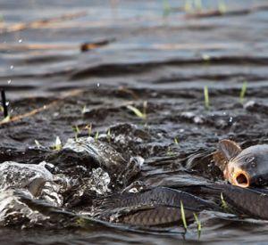Где и когда нельзя ловить рыбу?