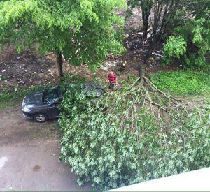 Сильные порывы ветра повалили дерево