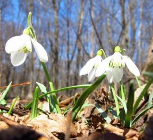 В России ожидается теплая весна
