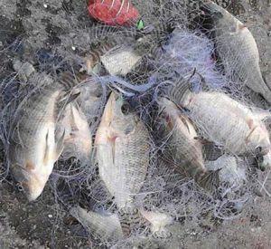 В Озерном полицейские задержали браконьеров