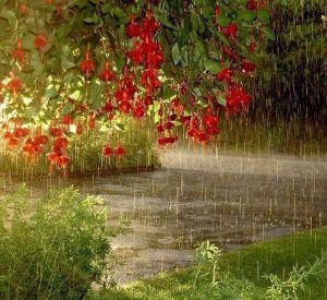 Какая погода ждет смолян в среду