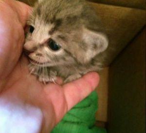 Чудом спасшийся котенок нашел новую маму