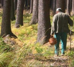В Смоленской области разыскивают мужчину с собакой