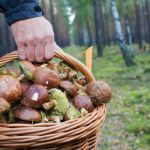 40-летнего грибника разыскивают третьи сутки