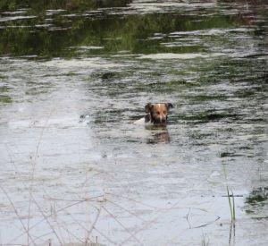 Спасатели вытащили из болота собаку
