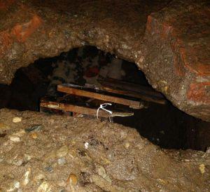 Срочно: Под бетонными плитами замуровали щенков