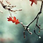 Прогноз погоды на четверг, 2 ноября