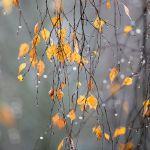 Прогноз погоды на воскресенье, 12 ноября
