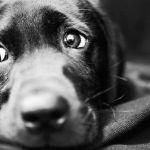 Неизвестные оставили собаку умирать, привязав ее к дереву