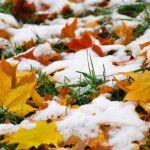 Прогноз погоды на понедельник, 20 ноября