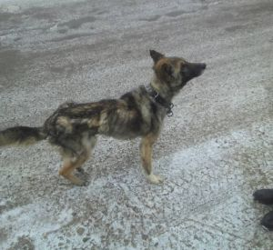 В Смоленске собаку довели до истощения