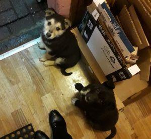 На трассе М1 водитель «Нивы» выкинул маленьких щенков
