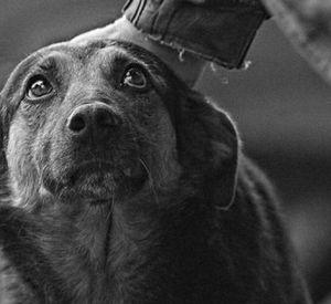 В Смоленске трем собакам ищут новую семью