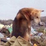 Плачущий пес отправился за помощью к рыбакам