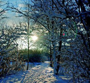 Прогноз погоды на понедельник, 15 января