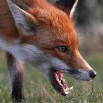 В нескольких районах области выявлены случаи бешенства животных
