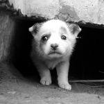 Безжалостный охранник расстрелял маленького щенка