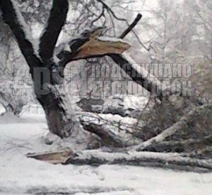 Упавшее дерево чуть не убило жительницу области