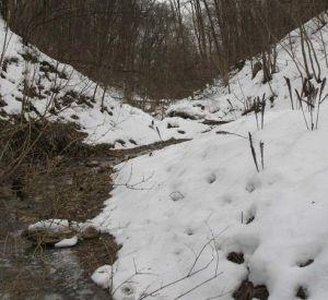 В овраге нашли тело молодого смолянина