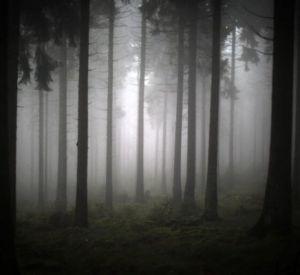 36-летняя смолянка сутки не могла выйти из леса