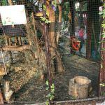 Сотрудники Лопатинского сада опровергли информацию о гибели белки