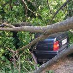 Фото: Сгнившее дерево упало на припаркованные автомобили