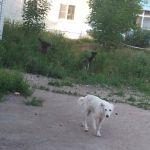 Жители Смоленска призывают перестать кормить бродячих собак