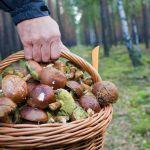 В Смоленской области разыскивают грибника
