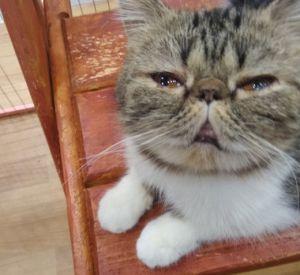 В сети появились шокирующие фотографии замученных животных на выставке «Федерация кошек»