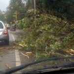 Сильный ветер повалил дерево на провода