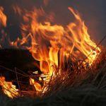 В Смоленской области огонь уничтожил полторы тонный сена