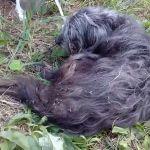 Смоляне спасли собаку, которую заживо ели черви (видео)