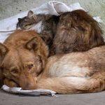 Смоленский зоопарк отметит День бездомных животных
