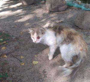 В Смоленской области пытаются спасти кошку