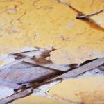 Видео: Смоляне вынуждены выживать в старом доме